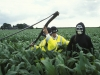 An anti-GM protester dressed as the grim reaper is arrested after cutting down a field of GM maize.